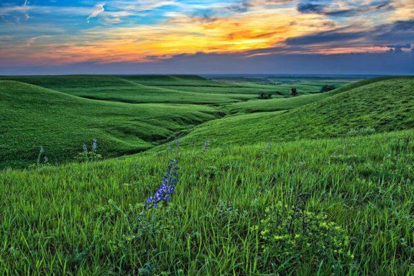 Prairie with Indigo landscape